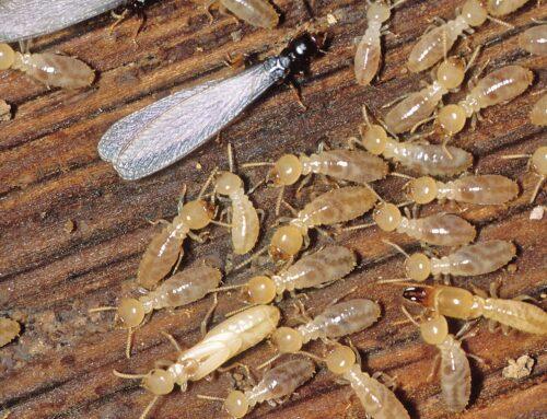 شركة مكافحة الرمة فى عجمان |0547378799| النمل الأبيض