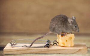 شركة مكافحة الفئران فى ام القيوين