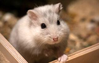 شركة مكافحة الفئران فى راس الخيمة