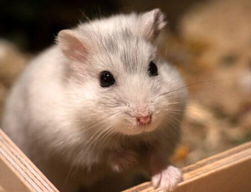 شركة مكافحة الفئران فى راس الخيمة |0547378799| ابادة فئران