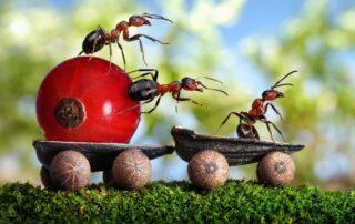 شركة مكافحة النمل في رس الخيمة