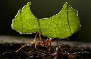 شركة مكافحة النمل في عجمان
