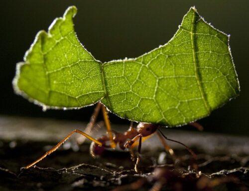 شركة مكافحة النمل في عجمان |0547378799| النمل الاسود