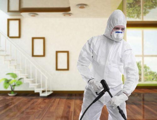 شركة مكافحة حشرات في دبي |0547378799| رش حشرات